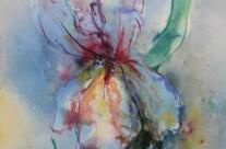 Irisblüte (Aquarell)
