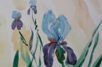 Iris (Aquarell)