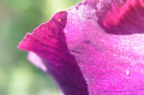 Iris 9